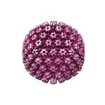 херпес симплекс, херпес вирус1